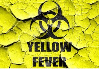 yellow fever vaccination zen healthcare